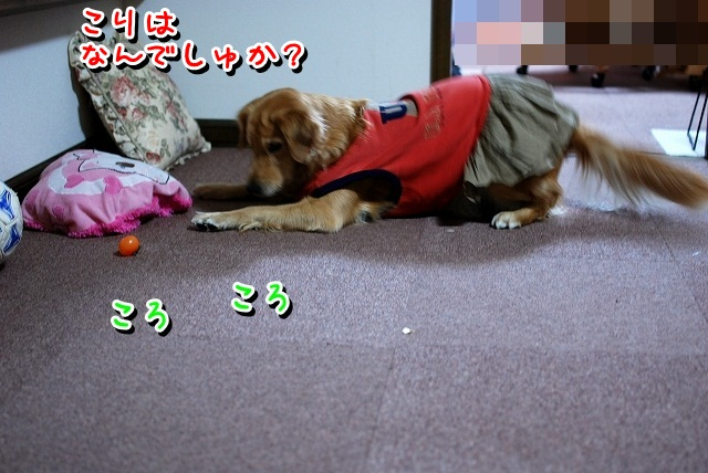 DSC_0070_20111230204107.jpg