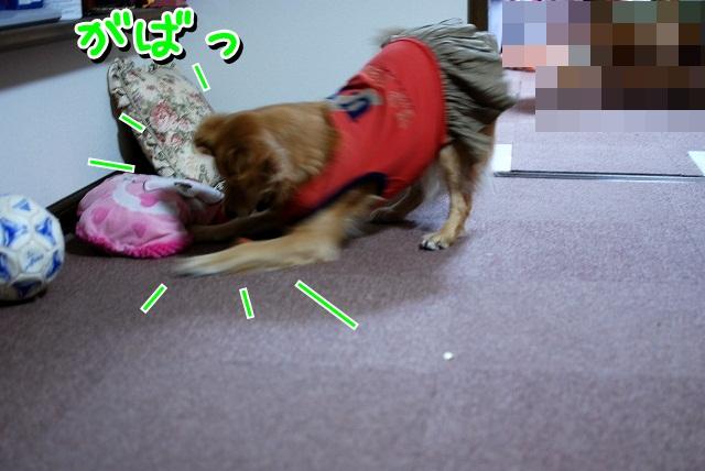 DSC_0071_20111230204107.jpg