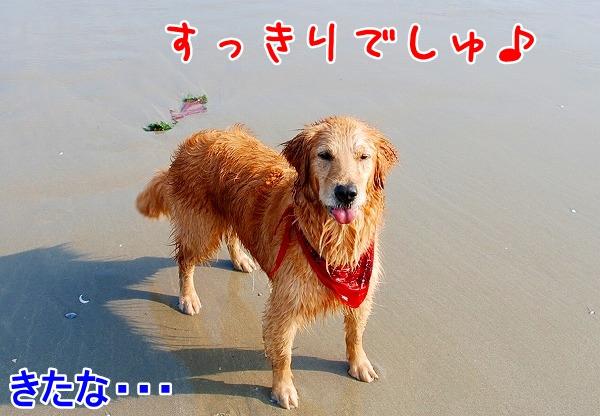DSC_0072_20110509005531.jpg