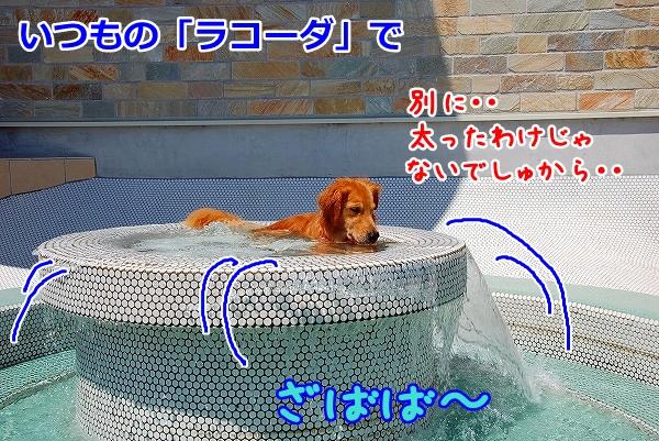 DSC_0072_20110808214243.jpg