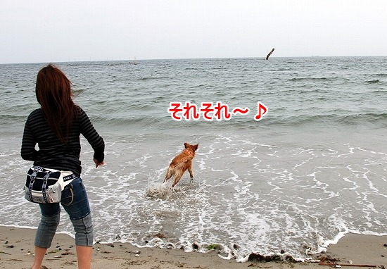 DSC_0078_20110518223523.jpg
