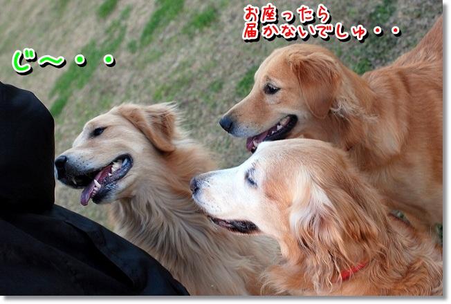 DSC_0081_20111230114435.jpg