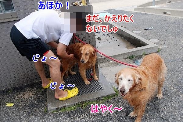 DSC_0082_20110601193223.jpg