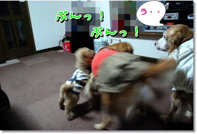 DSC_0085_20120217232403.jpg