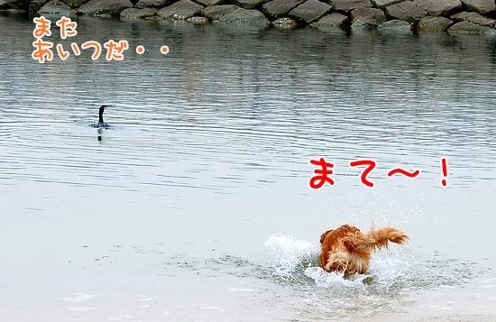 DSC_0089_20110504013127.jpg