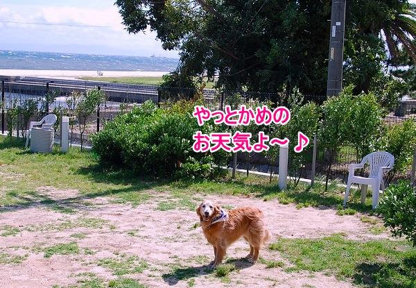 DSC_0089_20110531015508.jpg