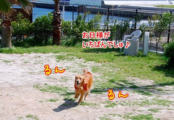DSC_0090_20110531015508.jpg