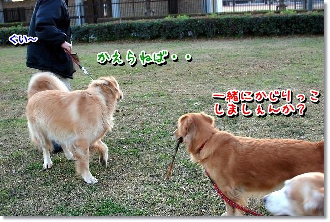 DSC_0090_20111230114434.jpg
