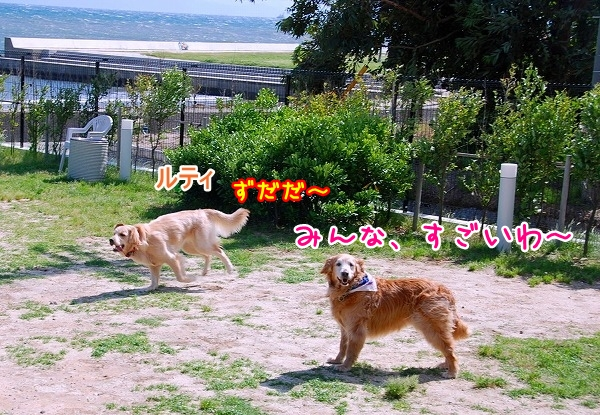 DSC_0092_20110531015507.jpg