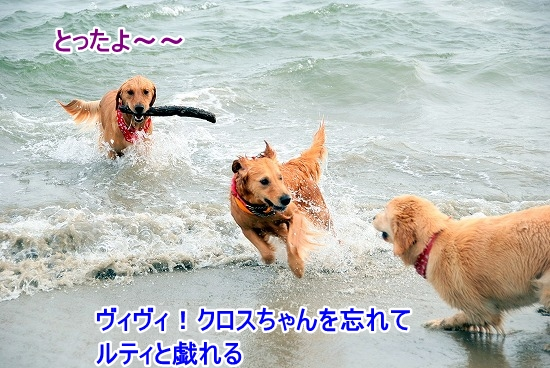 DSC_0093_20110518223607.jpg