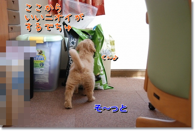 DSC_0093_20120222192843.jpg