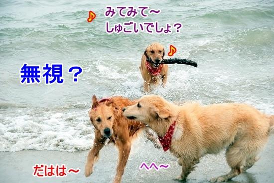 DSC_0094_20110518223607.jpg