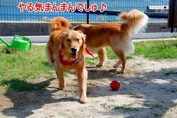 DSC_0094_20110531015507.jpg