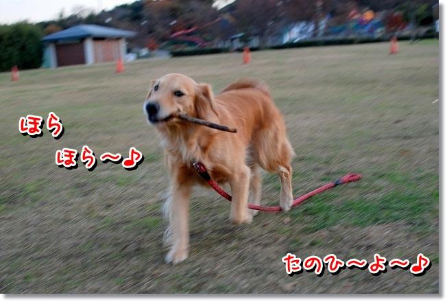DSC_0095_20111230114616.jpg