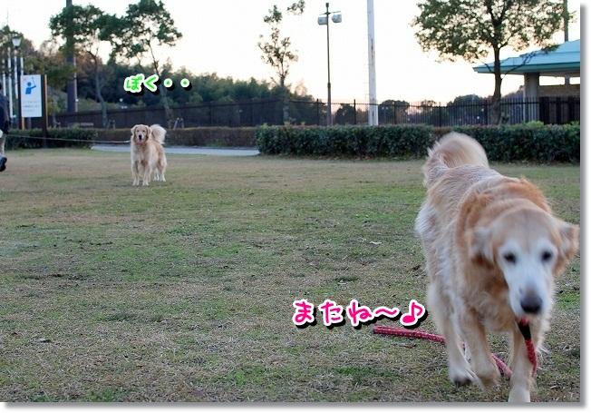 DSC_0096_20111230114616.jpg