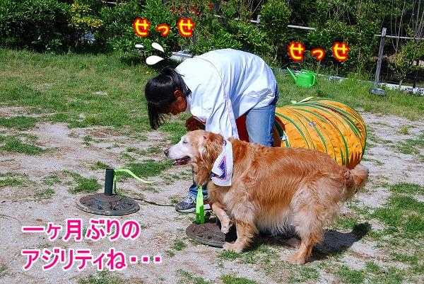 DSC_0097_20110531015557.jpg