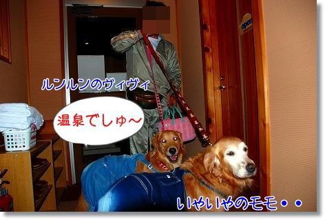 DSC_0098_20101122231039.jpg