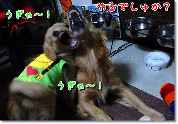 DSC_0098_20120302115612.jpg
