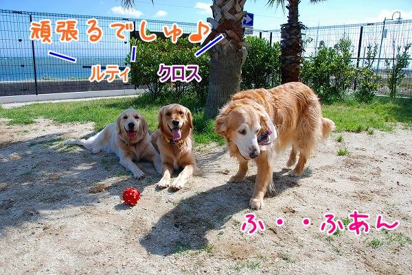 DSC_0099_20110531015557.jpg