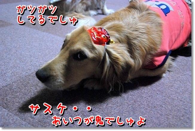 DSC_0100_20120204012631.jpg