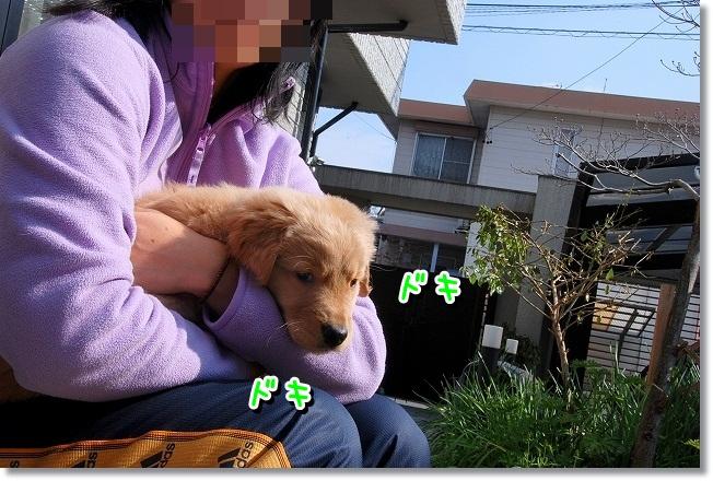 DSC_0100_20120212005512.jpg