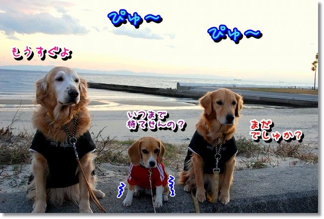 DSC_0104_20111220181927.jpg