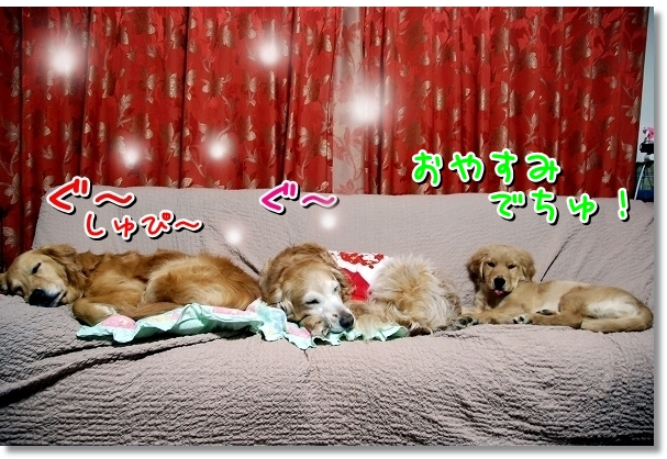DSC_0109_20120403005458.jpg