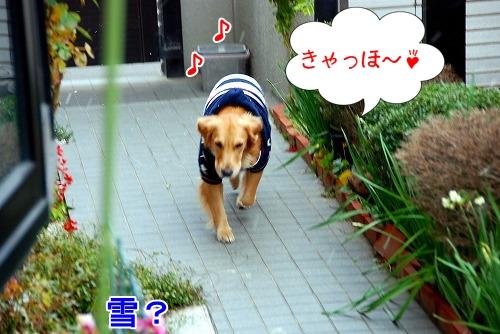 DSC_0111_20101231165500.jpg