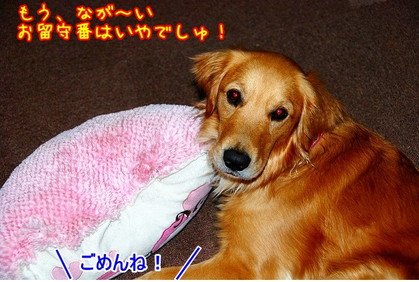 DSC_0111_20110320021059.jpg