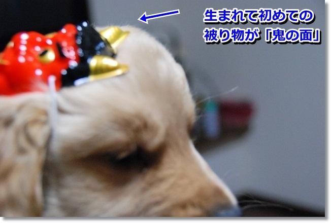 DSC_0111_20120204012630.jpg