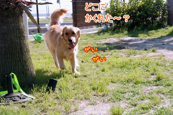 DSC_0112_20110531202941.jpg