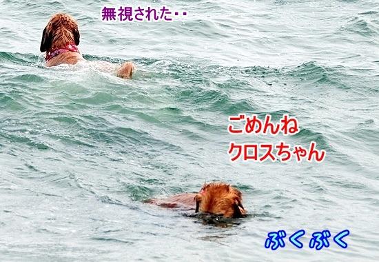 DSC_0113_20110518223606.jpg