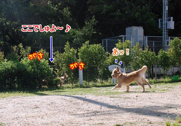 DSC_0113_20110531202940.jpg