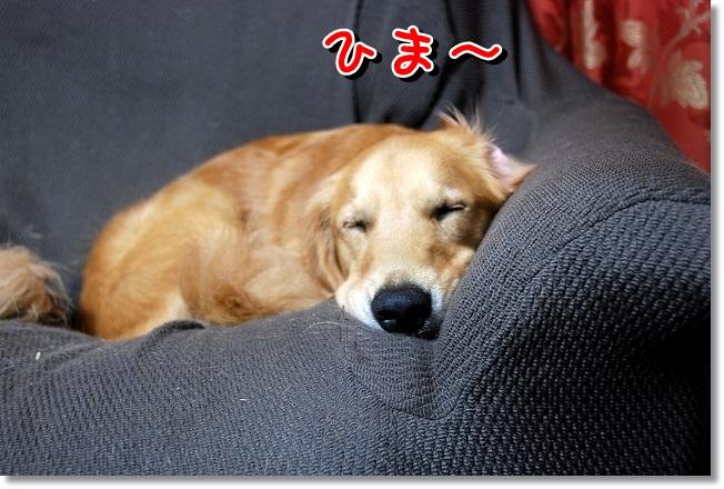 DSC_0113_20111119213327.jpg