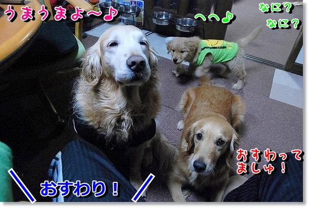 DSC_0113_20120302115611.jpg