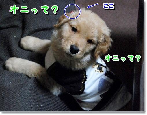 DSC_0114_20120204012630.jpg