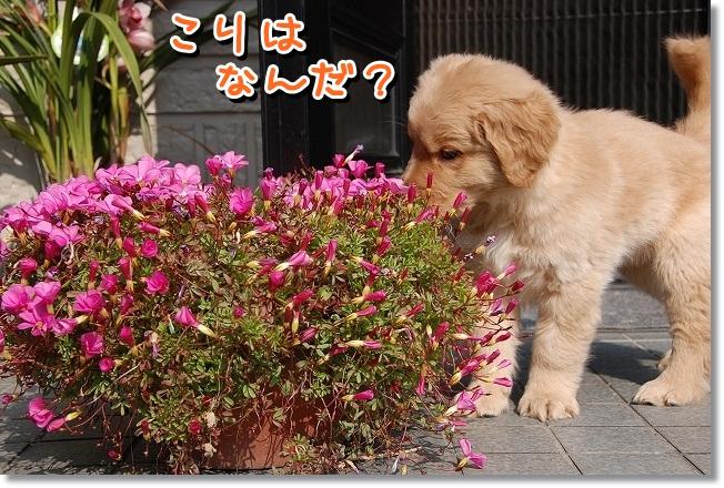 DSC_0114_20120212010200.jpg