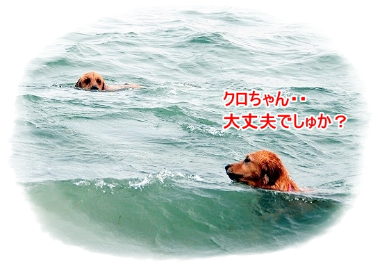 DSC_0116_20110518223654.jpg