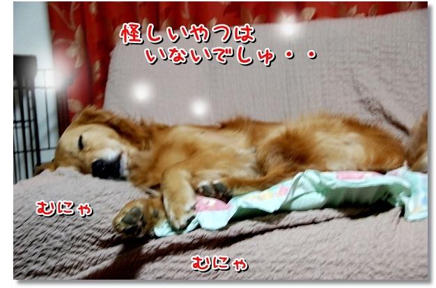 DSC_0116_20120403005457.jpg