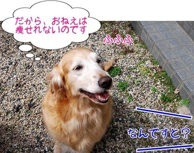 DSC_0117_20101224153535.jpg