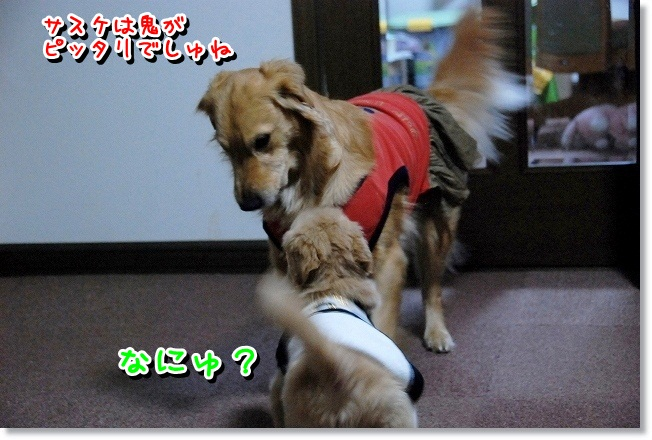 DSC_0117_20120204012724.jpg