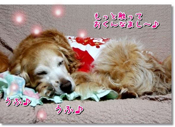 DSC_0117_20120403005457.jpg