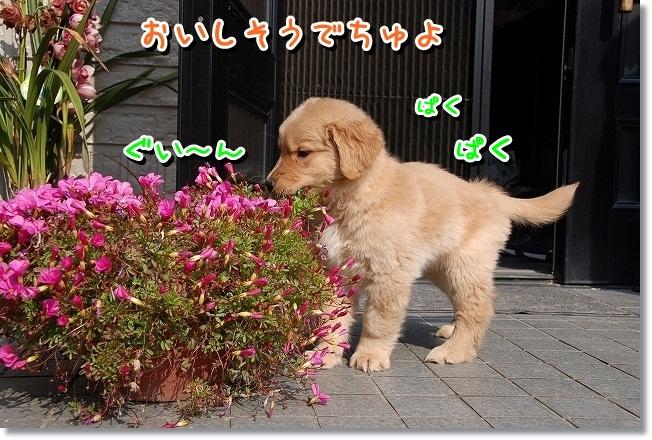 DSC_0118_20120212010158.jpg