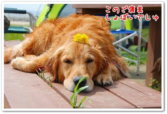 DSC_0124_20110505222756.jpg