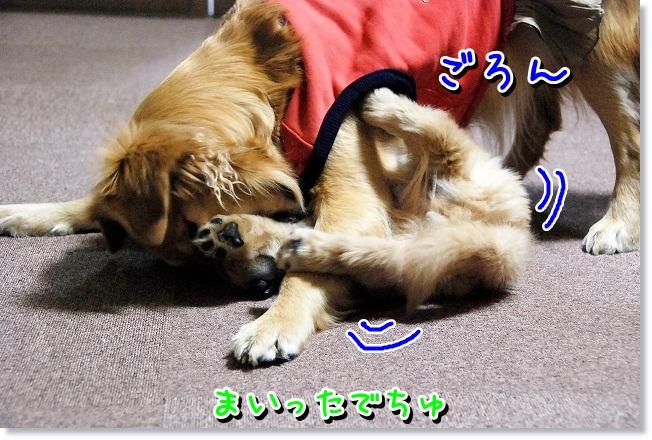 DSC_0124_20120204012723.jpg