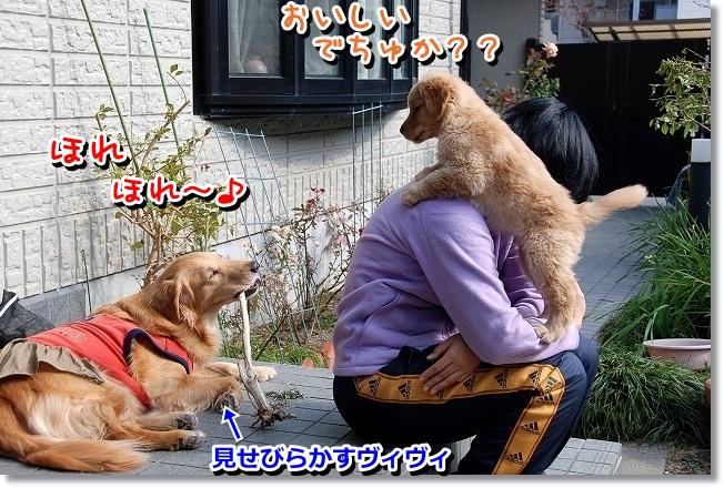 DSC_0129_20120212010259.jpg