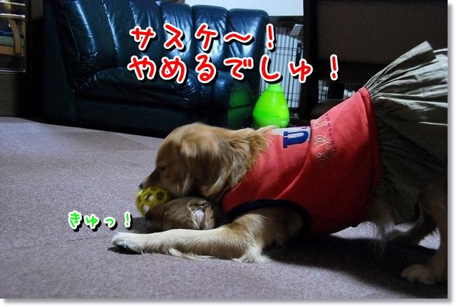 DSC_0132_20120204012722.jpg