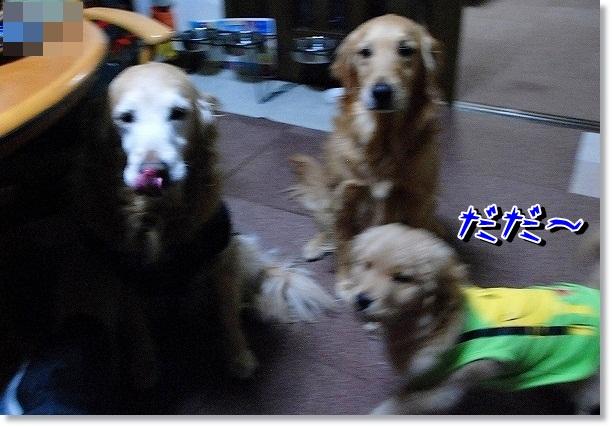 DSC_0134_20120302115611.jpg