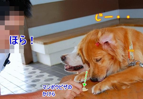 DSC_0135_20110721174623.jpg
