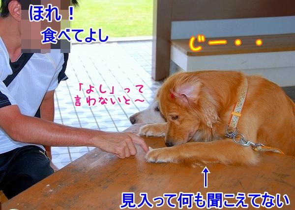 DSC_0136_20110721174622.jpg
